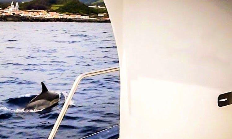 Traditional Fishing Boat Rental in São Mateus da Calheta