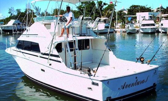 Enjoy Fishing In Cancún, Mexico On 33' Bertram Sport Fisherman