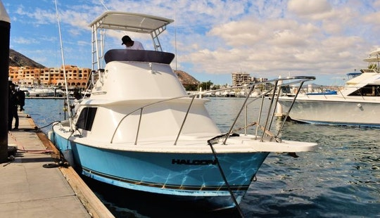 31' Bertram - Halcon Sport Fisherman Fishing Charter In Cabo San Lucas, Mexico