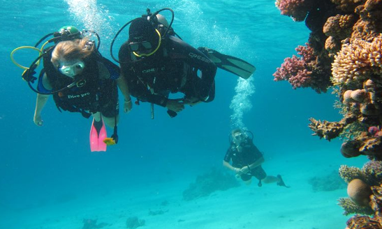 Experience Diving And Diving Courses In Red Sea Governorate, Egypt