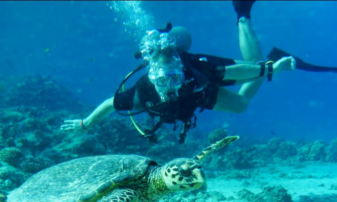 Scuba Diving And Diving Courses in Red Sea Governorate, Egypt