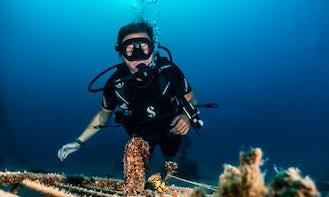 Enjoy the underwater paradise in Eilat, Israel