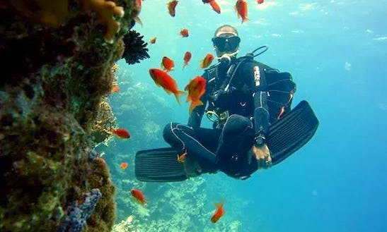 Amazing Chance To Explore Underwater World In South Sinai Governorate, Egypt