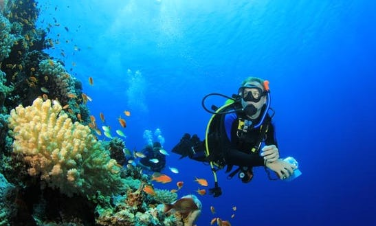 An Amazing Diving Experience In Philipsburg, Sint Maarten