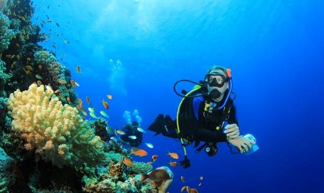 An amazing diving experience in Philipsburg, Sint Maarten