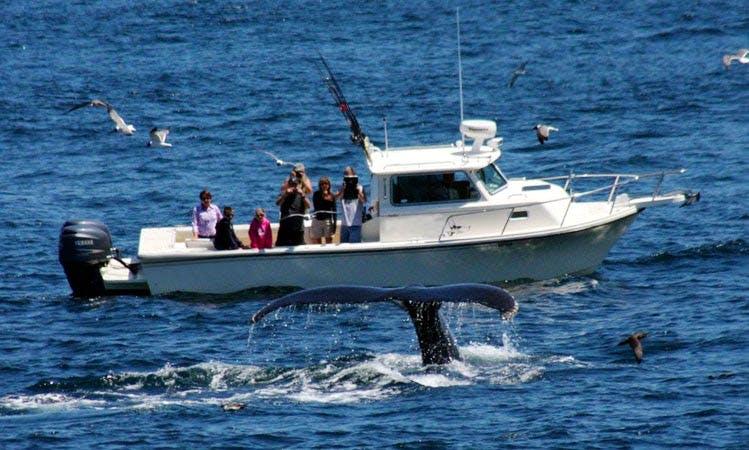 "28ft ""Kupala"" Parker Boat Charter in Provincetown, Massachusetts"