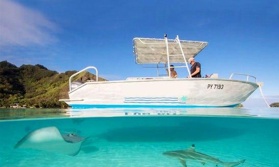 Fun Diving Trips Onboard A 24' Aluminium Boat In Hauru