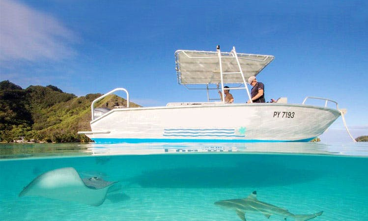 Fun Diving Trips onboard a 24' Aluminium Boat in Hauru