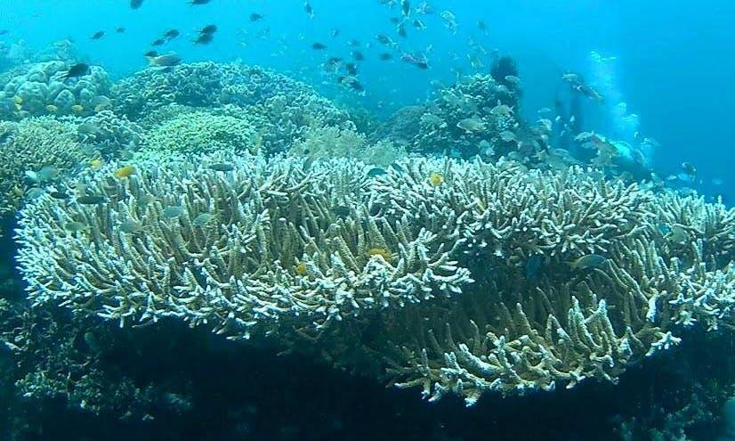 Enjoy beautiful snorkeling experience in Gerokgak, Bali