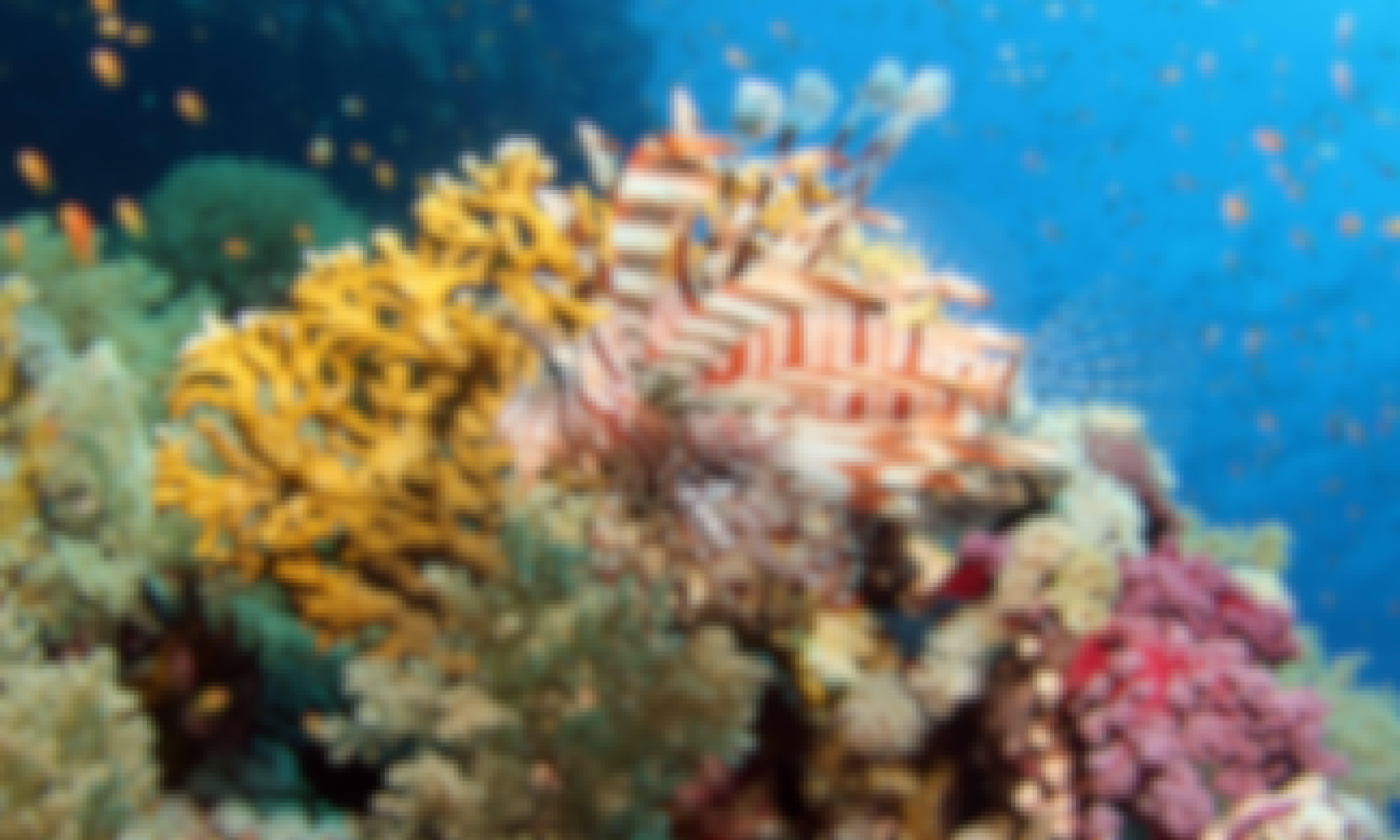 Enjoy Daily Diving Boat in Sharm el Sheikh, Egypt