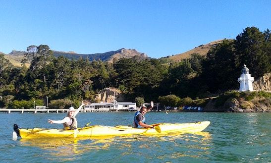 A Great Kayak Adventure In Akaroa, New Zealand
