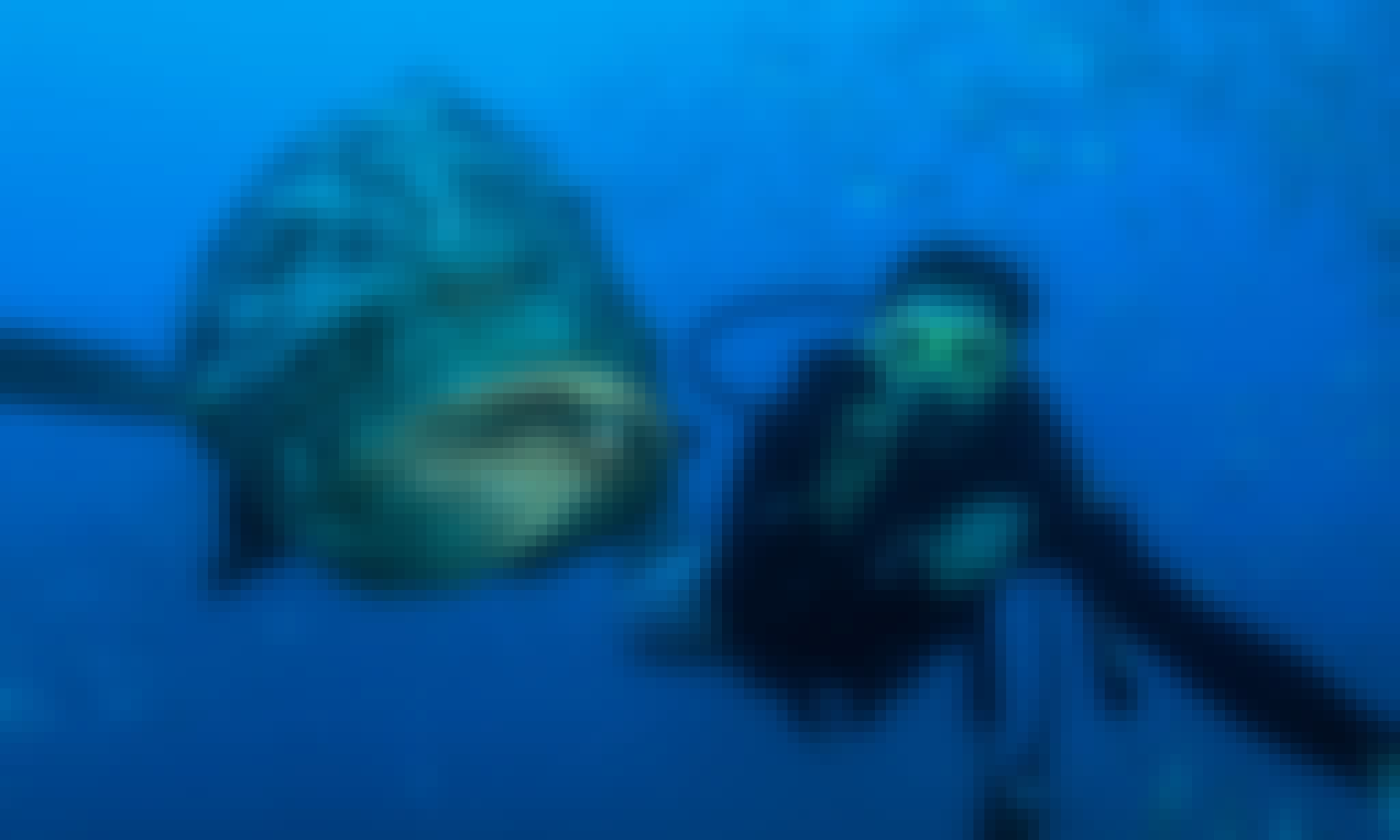 Scuba Diving Trips for Beginner and Advanced Divers in Maragogi, Brazil