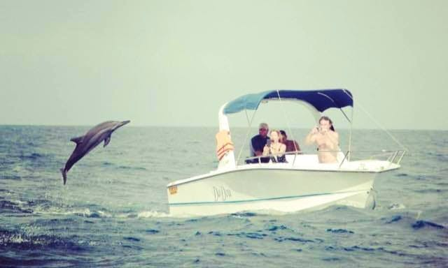 Dolphin Watching and Dive Trips in Albion, Mauritius