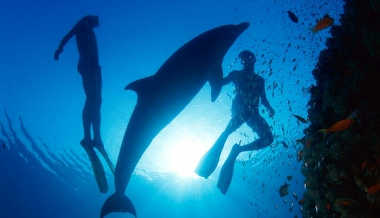 Scuba Diving In The Red Sea With Professional Padi Instructor