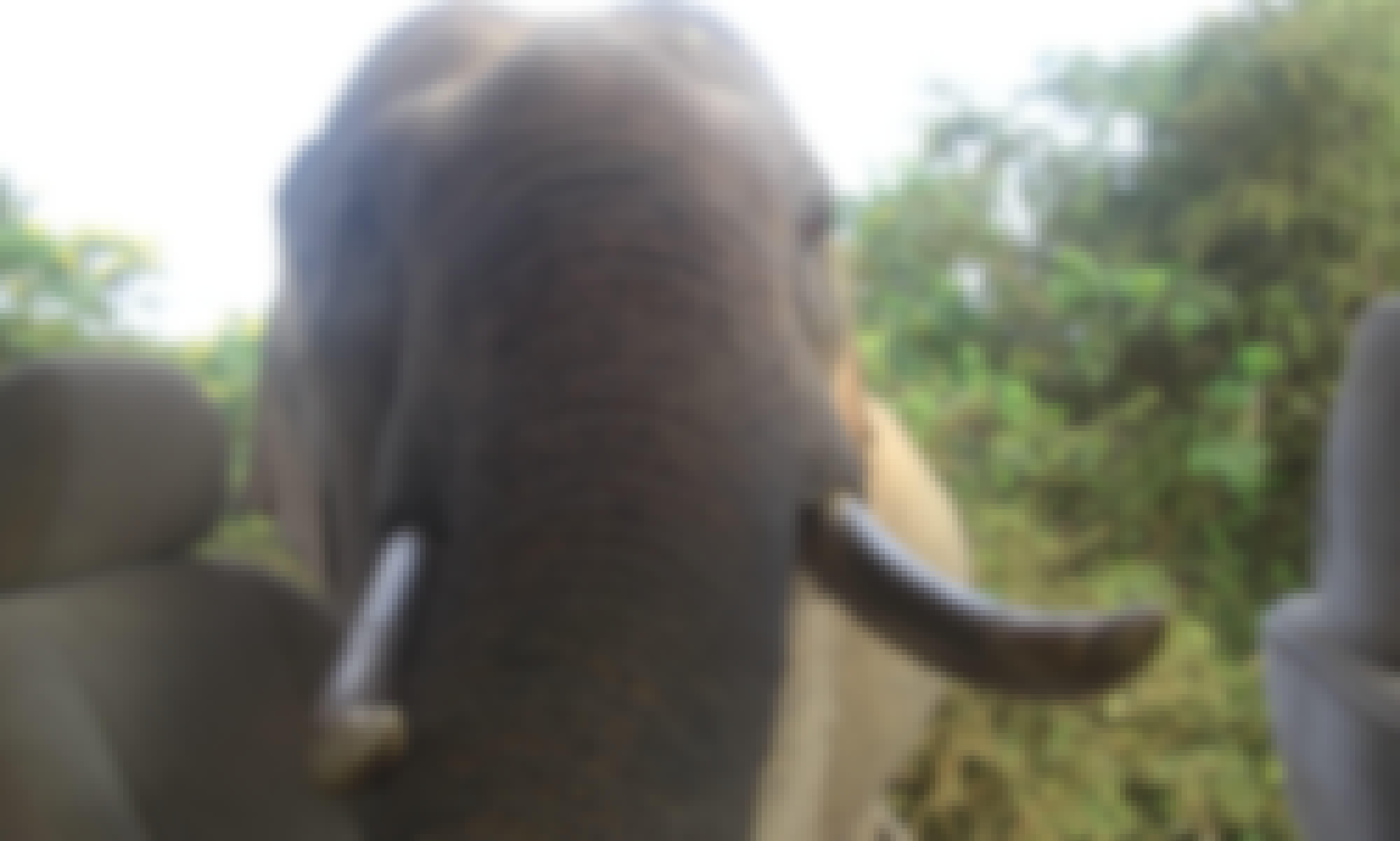 Udawalawe Wildlife Safari from Bentota