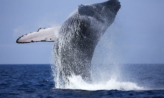 Whale Watching from Bentota