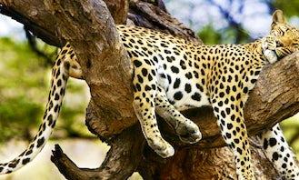 Yala Safari from Bentota