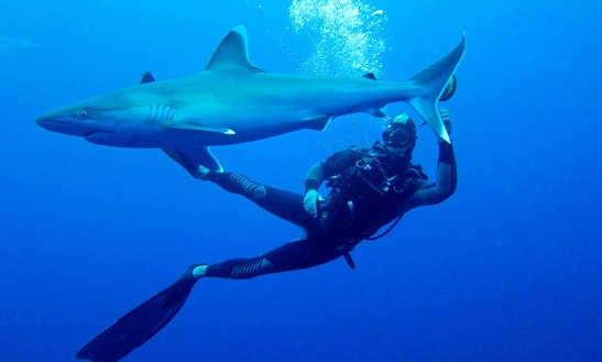 Shark Diving Safari In  South Africa And Mozambique