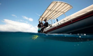 Boat Diving Trips and Humpback Whale Watching Trip in Taravao, French Polynesia