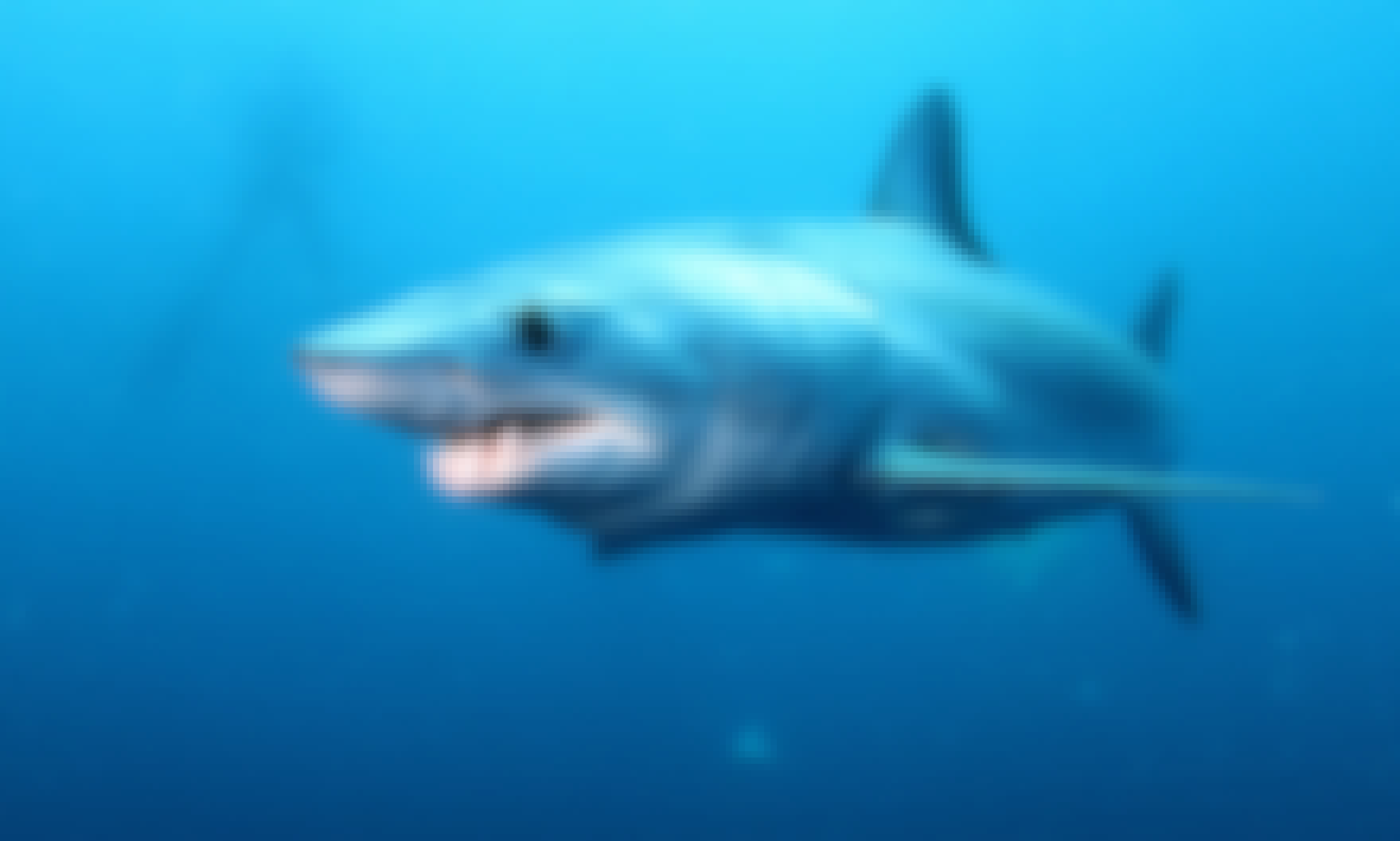 11day Shark Diving Safari in South Africa and Mozambique