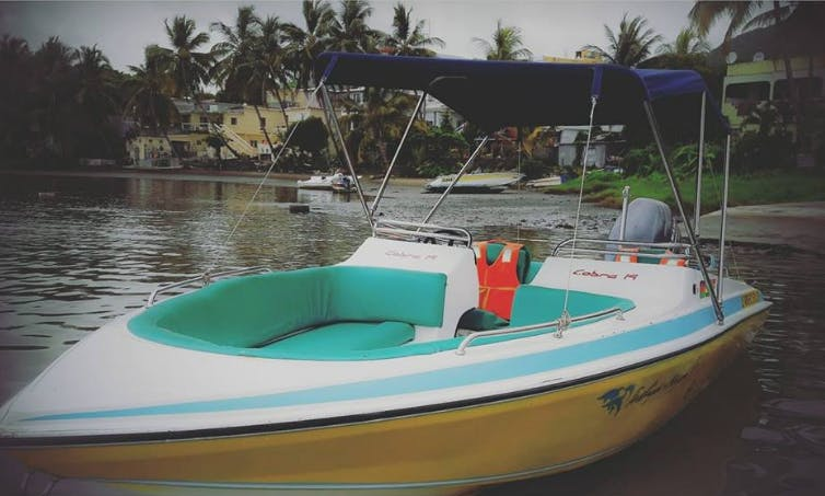 Private Dolphin Tour on a Bowrider for 6 People in Black River, Mauritius
