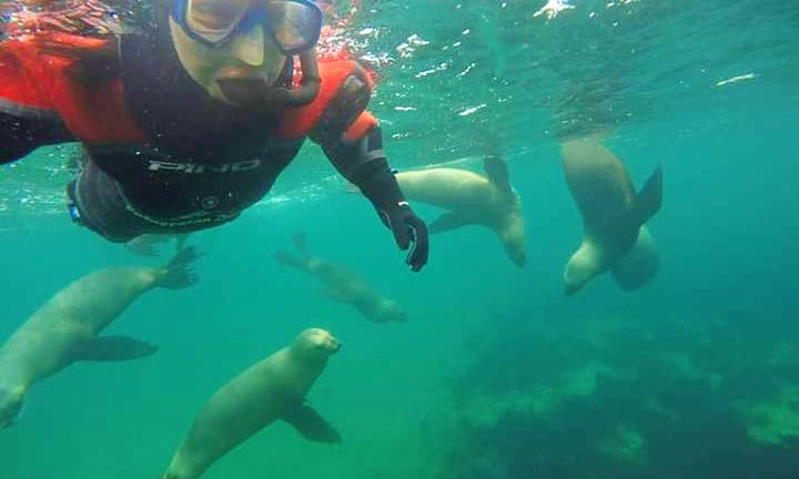 Experience Snorkeling with Sea Lions in Puerto Piramides, Argentina