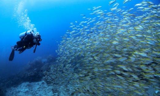 Amazing Scuba Adventure in Phi Phi, Thailand
