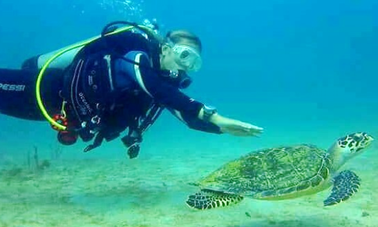A Great Diving Experience In Cartagena, Colombia