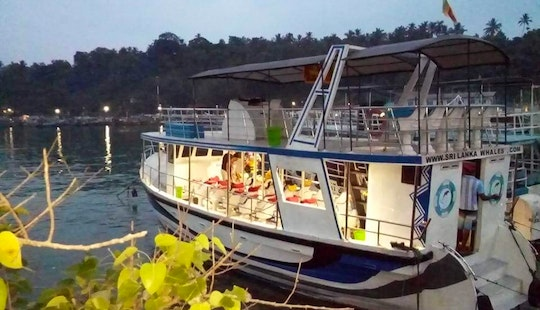 Go Whale Watching In Mirissa, Sri Lanka For A Memorable And Ethical Experience!