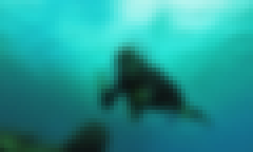 Private Diving Trip Offered in Isla de Pascua, Chile