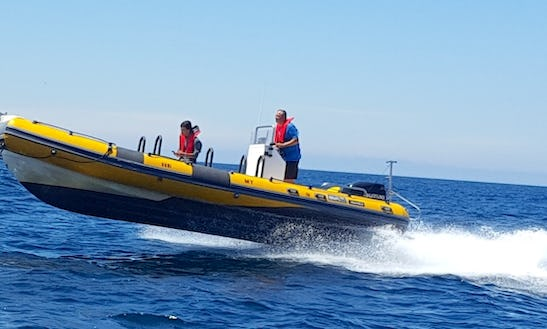 25 Ft Bwa America Rib Rental For 14 People In Leiria, Portugal