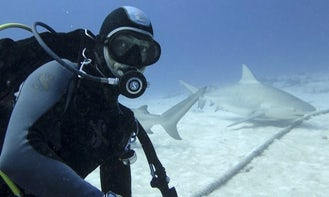 Diving with Bull Sharks in Playa del Carmen (November to February Only)