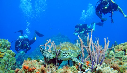 Full Day Diving Trips & Diving Courses Offered In Cozumel,quintana Roo, Mexico