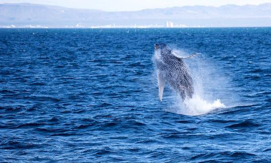 Whale Watching Tour In Reykjavík