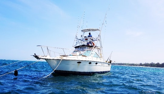Tiara Sst 31 Fishing Charter - 4 People In Mombasa County