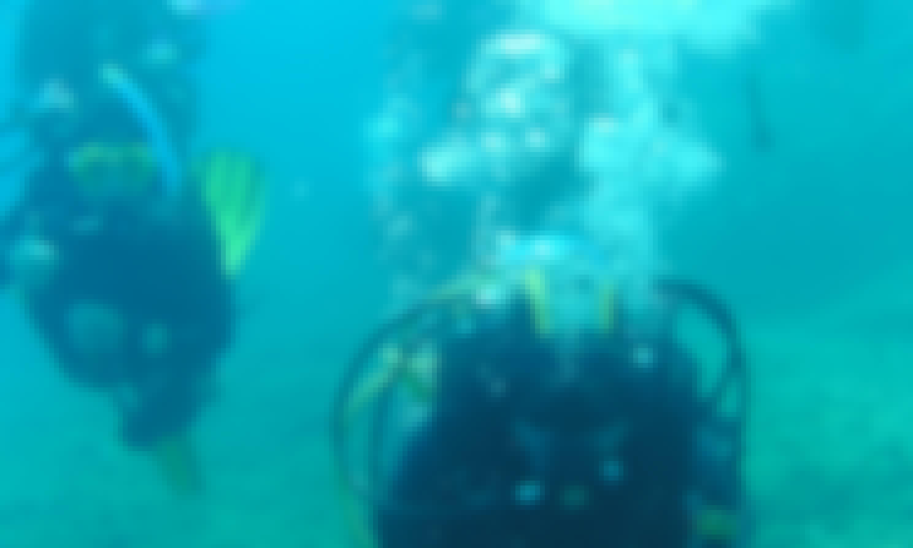 Amazing Diving Trip in Bergeggi, Liguria