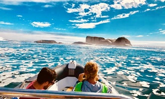 1 Hour Marine Wildlife Boat Tour - Clifton