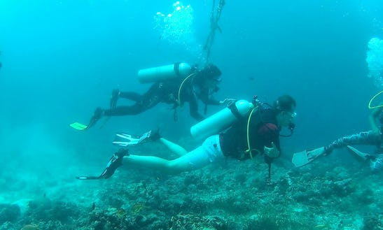 Diving Trip With Professional Guide In Cebu City, Philippines