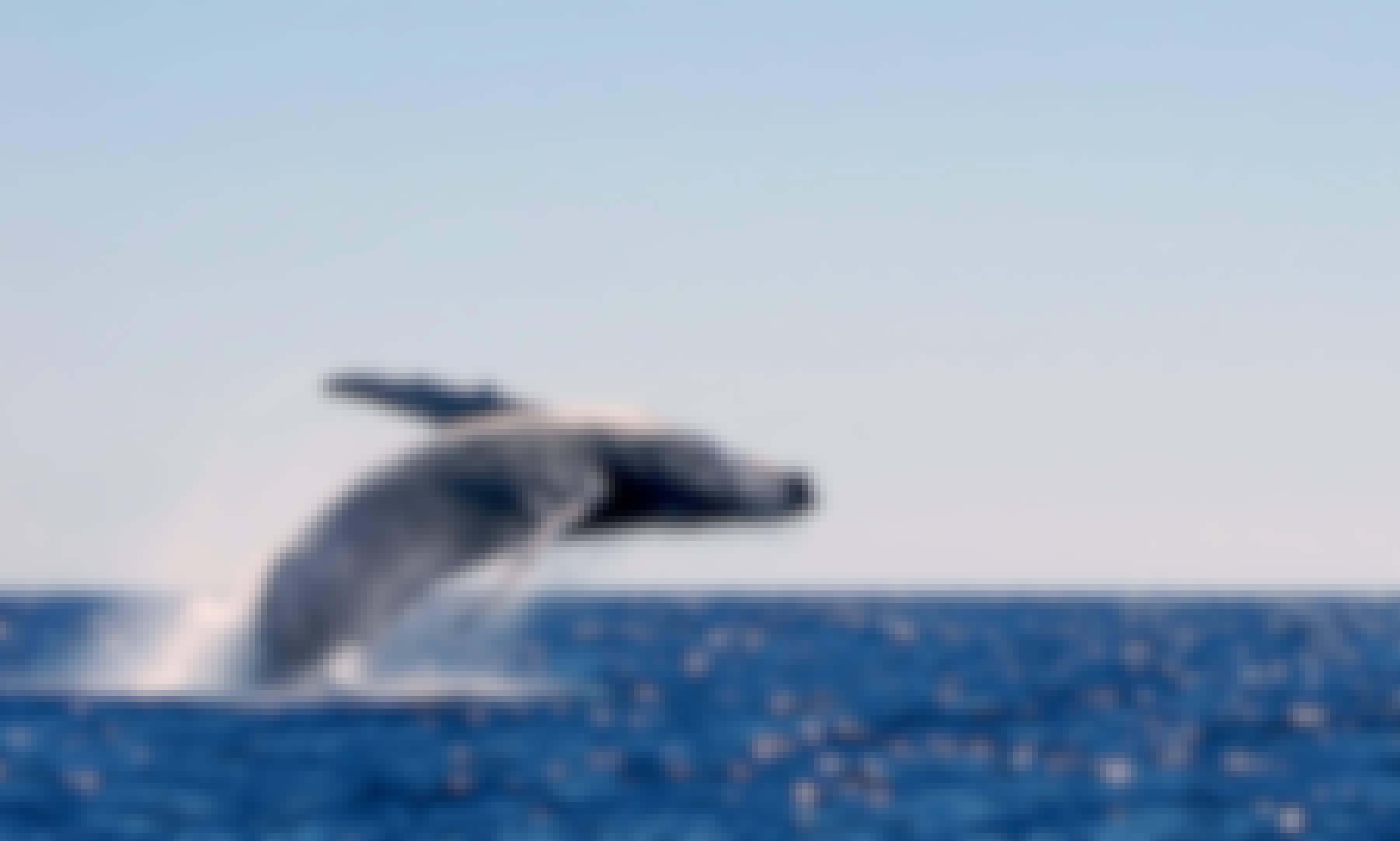 Whale watching tour : captain + fuel + handeck included in quote..