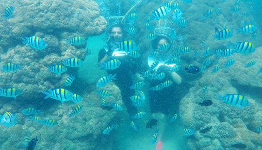 Discover Under Water Beauty By Sea Walking In Kuta Selatan, Indonesia