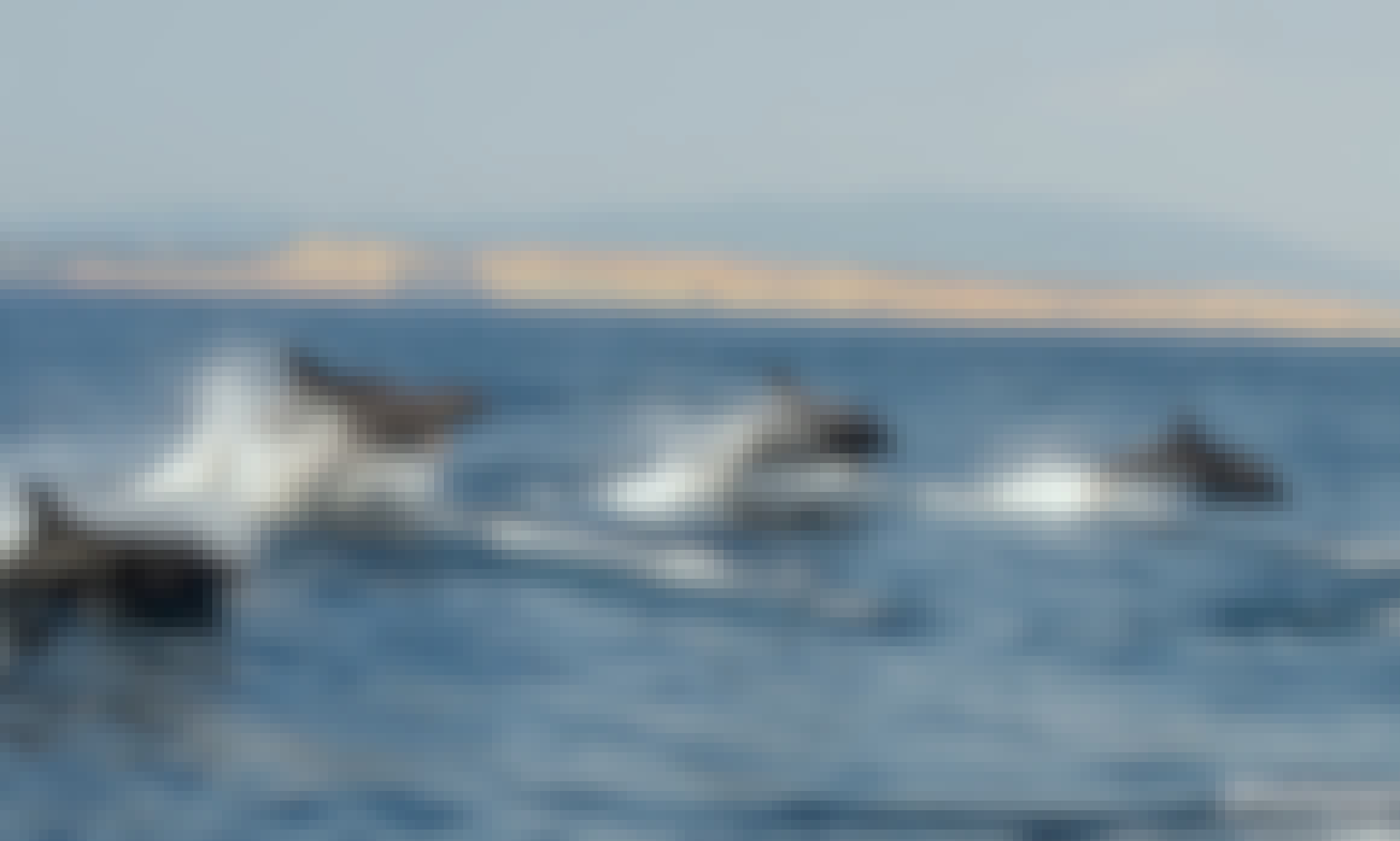 Dolphin and Whale watching trips in Lagos, Portugal