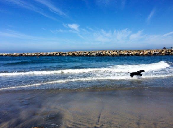 Dexter on Dog Beach