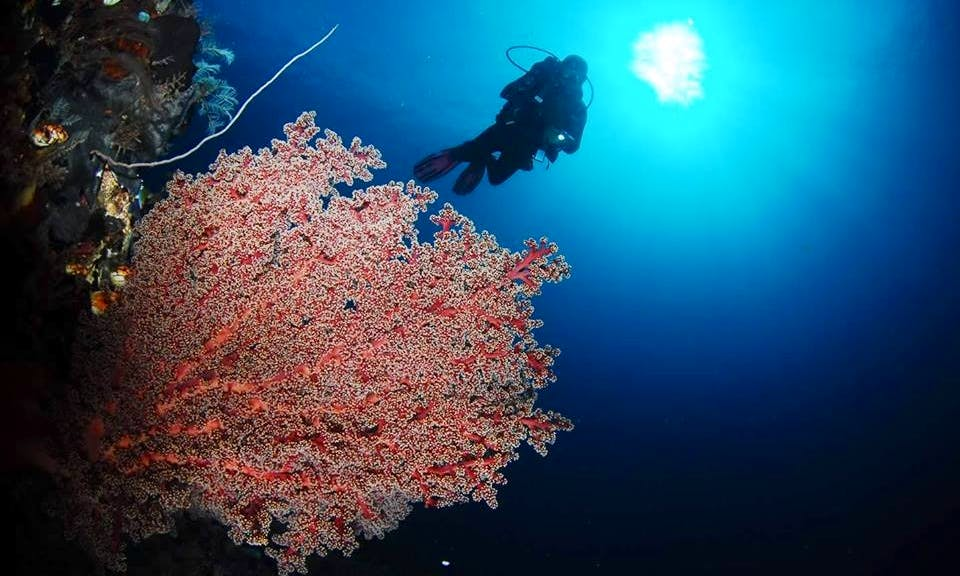 5 Days / 4 Nights Diving Tour in Bunaken, Indonesia