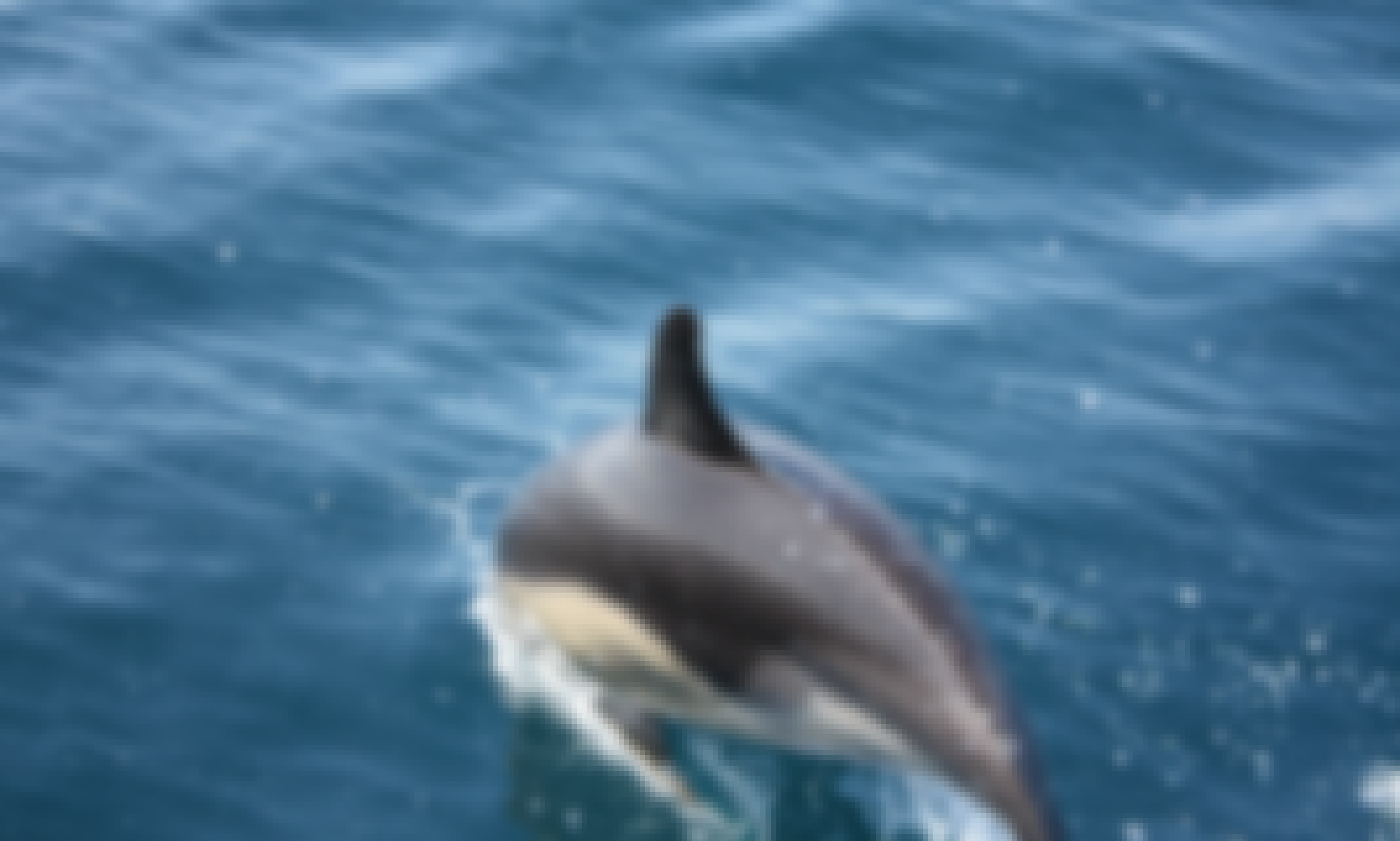 Boat Tour for 5 Person on Atlantic Ocean - The Highlight of your Holidays!