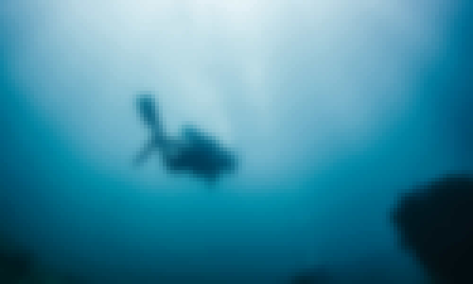 Fun Scuba Diving Trip in Sayulita, Nayarit