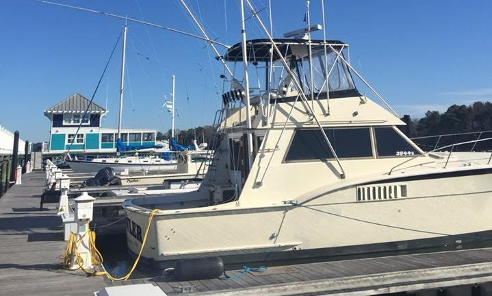Offshore Gulfstream Fishing in Hatteras, North Carolina With Captain Louis