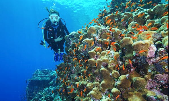 Wonderful Scuba Diving Adventure In Ankara, Turkey