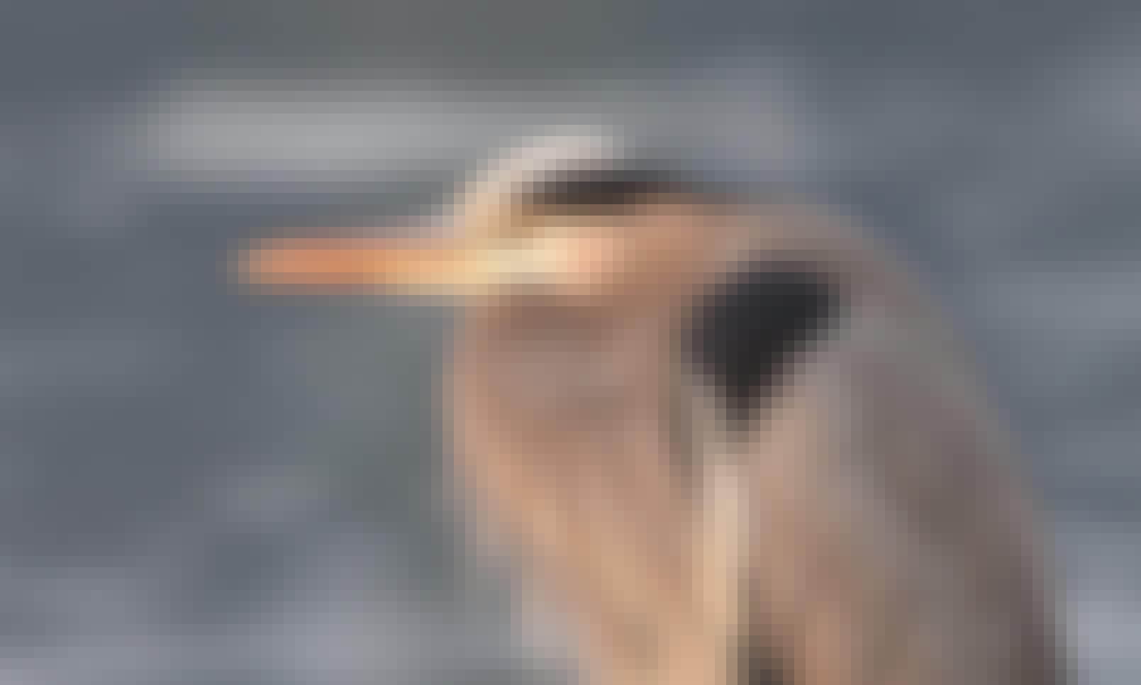 Bird watching by Kayak in Cowichan Bay