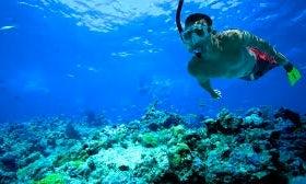 Amazing Snorkeling Adventure in Dibba Al Fujairah, UAE