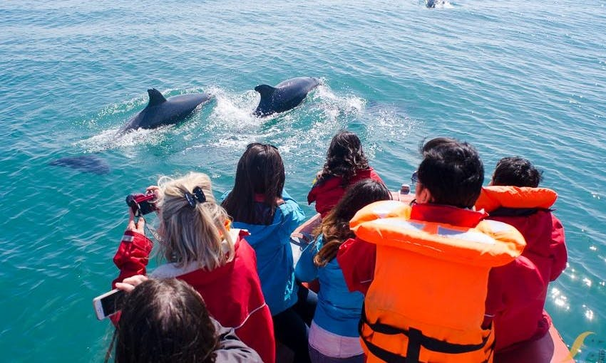 Guided Dolphin Watching Tour onboard a Speedboat in Lisboa, Portugal